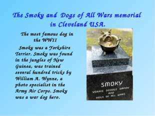 The Smoky and Dogs of All Wars memorial in Cleveland USA. The most famous dog