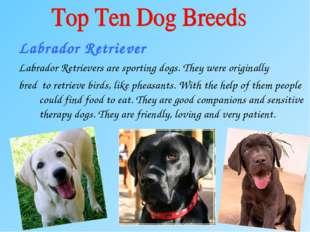 Labrador Retriever Labrador Retrievers are sporting dogs. They were originall