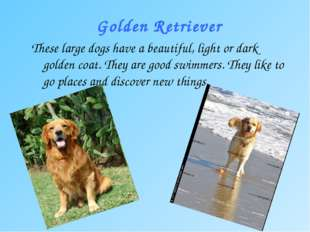 Golden Retriever These large dogs have a beautiful, light or dark golden coat