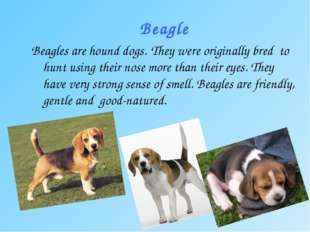 Beagle Beagles are hound dogs. They were originally bred to hunt using their