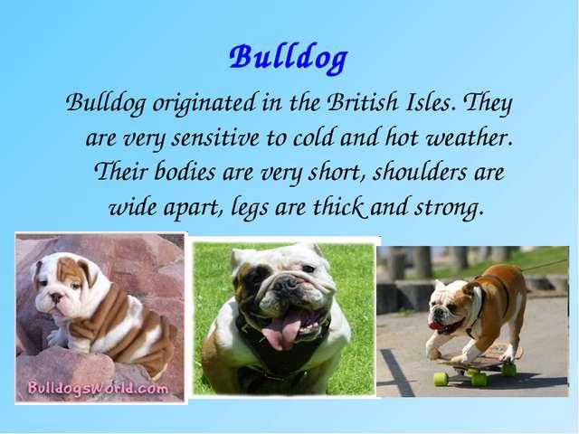 Bulldog Bulldog originated in the British Isles. They are very sensitive to c...