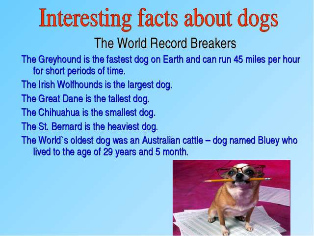 The World Record Breakers The Greyhound is the fastest dog on Earth and can...
