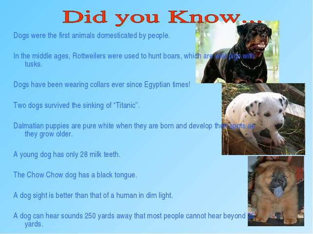 Dogs were the first animals domesticated by people. In the middle ages, Rottw...