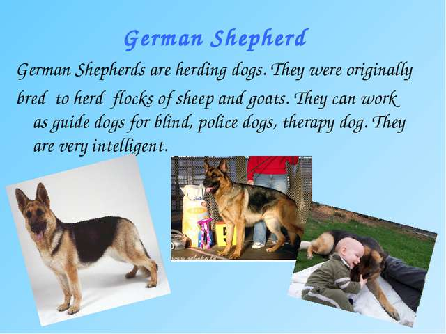 German Shepherd German Shepherds are herding dogs. They were originally bred...