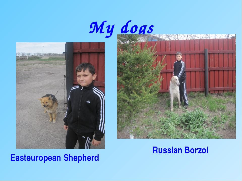 My dogs Easteuropean Shepherd Russian Borzoi