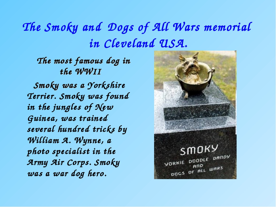 The Smoky and Dogs of All Wars memorial in Cleveland USA. The most famous dog...