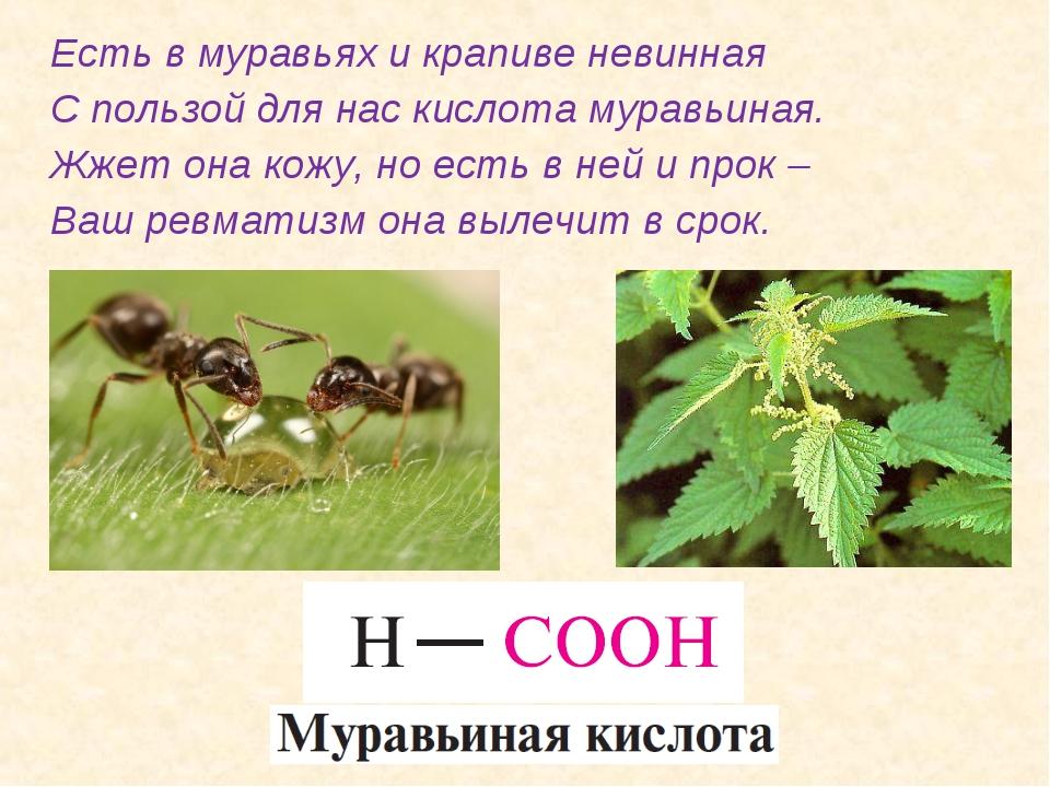 Есть в муравьях и крапиве невинная С пользой для нас кислота муравьиная. Жжет...