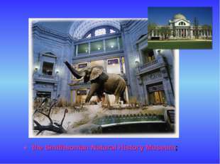 the Smithsonian Natural History Museum;