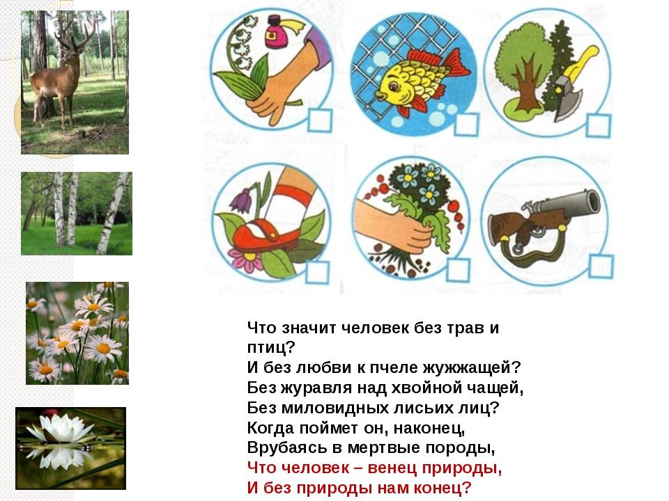 Что значит человек без трав и птиц? И без любви к пчеле жужжащей? Без журавля...