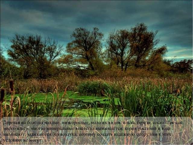 Деревья на болотах чахлые, низкорослые, мало их видов: ольха, берёза, сосна....