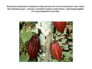 Встречаются в Бразилии и совершенно особые растения. Из этого растения делают