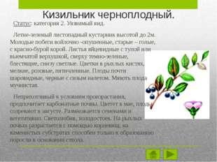 Местоположение вида. Евразийский степной и лесостепной вид с широким ареалом.