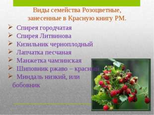 Кизильник черноплодный. Статус: категория 2. Уязвимый вид. Летне-зеленый лист