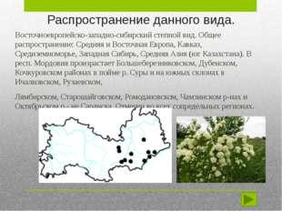 Распространение данного вида. Восточноевропейско-западно-сибирский степной ви
