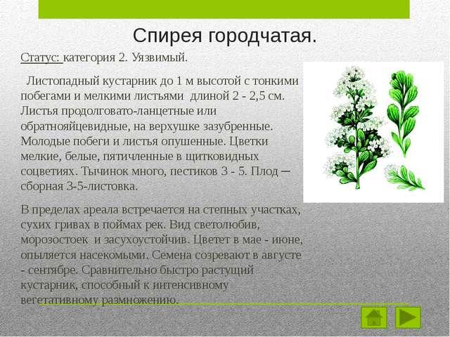 Лапчатка песчаная. Травянистое многолетнее растение с небольшим неутолщенным...