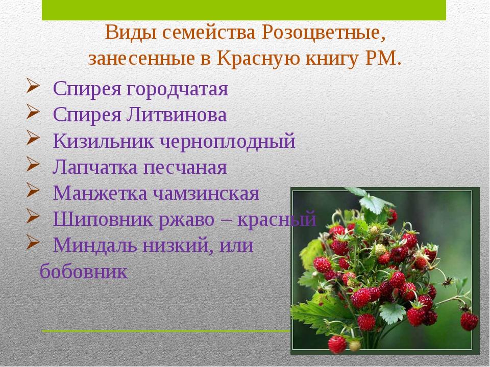 Кизильник черноплодный. Статус: категория 2. Уязвимый вид. Летне-зеленый лист...