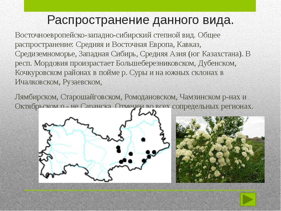 Распространение данного вида. Восточноевропейско-западно-сибирский степной ви...