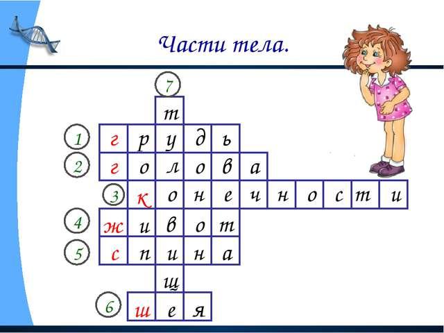 Части тела. г 1 2 3 4 5 6 г к ж с ш 7 р у д ь о л о в а о н е ч н о с т и и в...