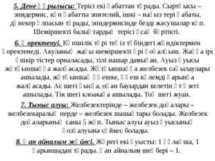 7. Тыныс алуы: Желбезектерінде – желбезек доғалары – желбезекаралық перде – ж