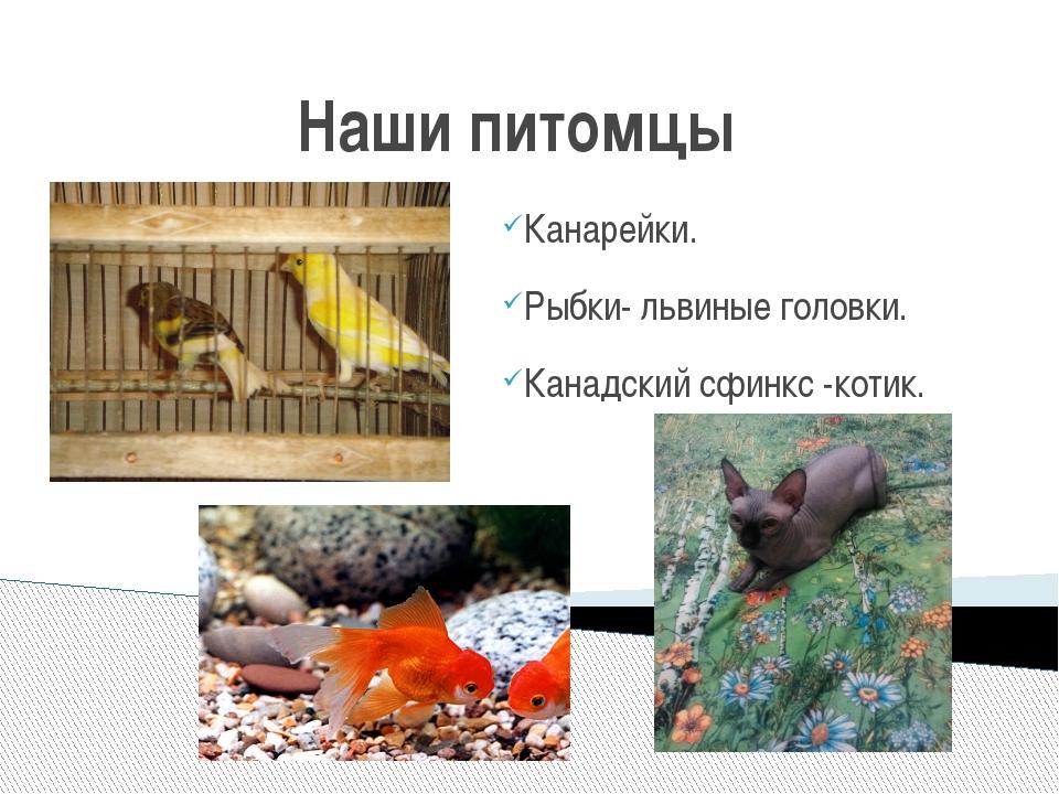 Наши питомцы Канарейки. Рыбки- львиные головки. Канадский сфинкс -котик.