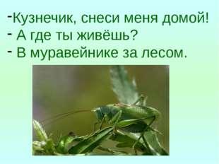 Кузнечик, снеси меня домой! А где ты живёшь? В муравейнике за лесом.