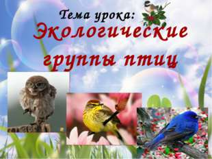 Водно-болотные птицы Лебеди Пеликан Фламинго