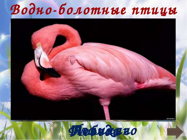 Птицы Перелетные Кочующие Оседлые