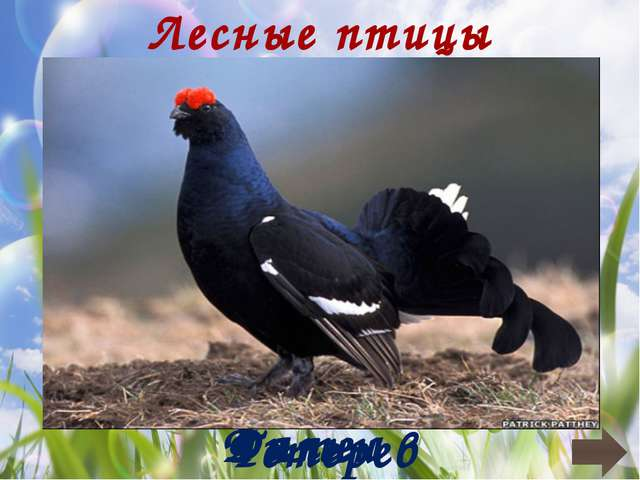 Перелетные птицы Серая Славка Варакушка Зяблик Грач
