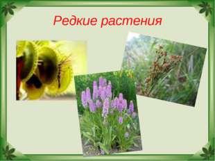 Редкие растения