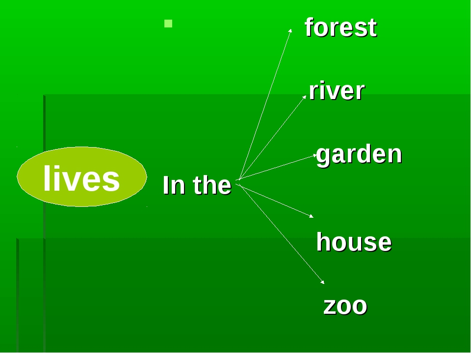 lives forest river garden In the house zoo lives