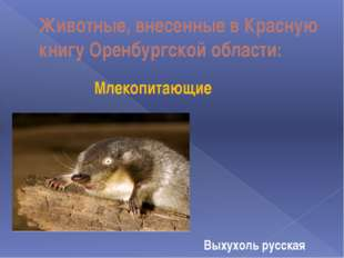 Животные, внесенные в Красную книгу Оренбургской области: Млекопитающие Выхух