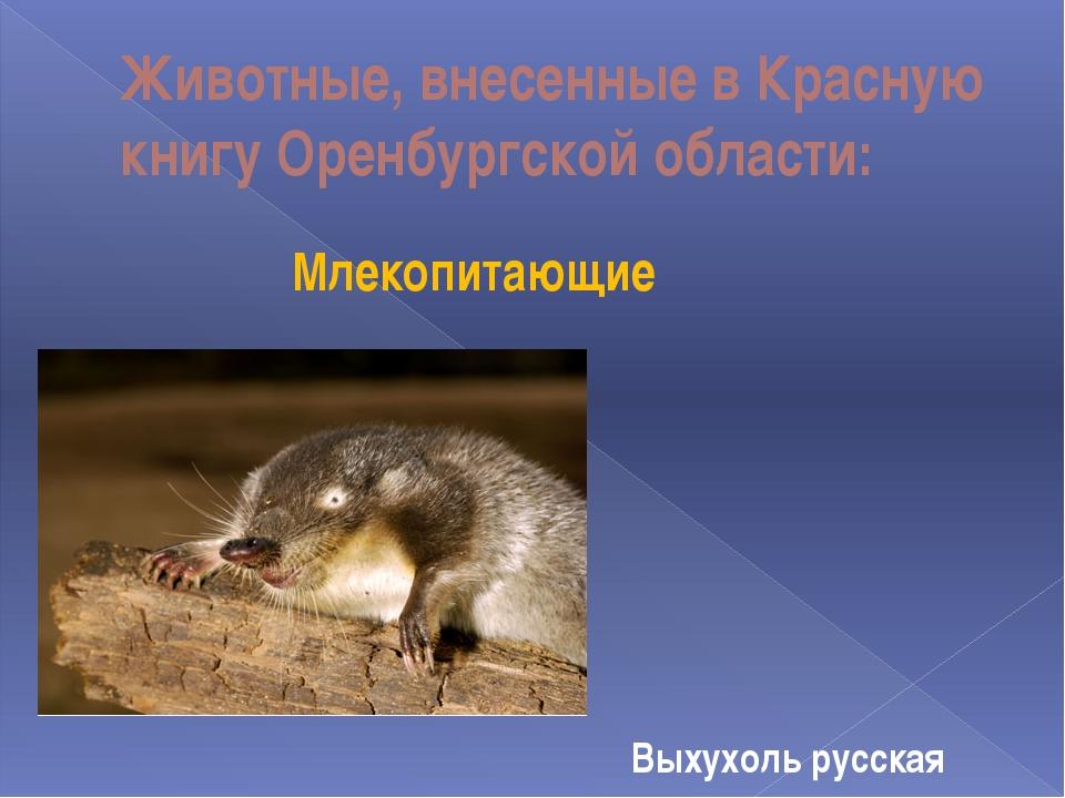 Животные, внесенные в Красную книгу Оренбургской области: Млекопитающие Выхух...