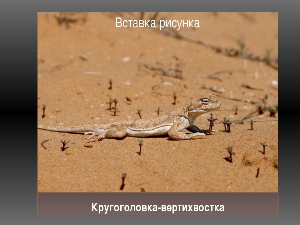 Кругоголовка-вертихвостка