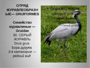 ОТРЯД ЖУРАВЛЕОБРАЗНЫЕ— GRUIFORMES Семейство журавлиные — Gruidae 30. СЕРЫЙ ЖУ