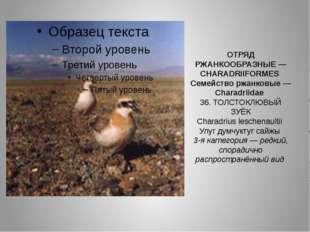 ОТРЯД РЖАНКООБРАЗНЫЕ — CHARADRIIFORMES Семейство ржанковые — Charadriidae 36.
