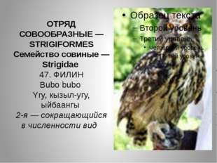 ОТРЯД СОВООБРАЗНЫЕ — STRIGIFORMES Семейство совиные — Strigidae 47. ФИЛИН Bub