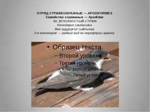 ОТРЯД СТРИЖЕОБРАЗНЫЕ — APODIFORMES Семейство стрижиные — Apodidae 48. ИГЛОХВО