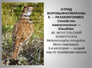 ОТРЯД ВОРОБЬИНООБРАЗНЫЕ — PASSERIFORMES Семейство жаворонковые — Alaudidae 49