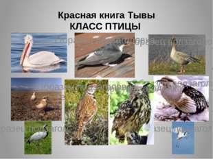 Красная книга Тывы КЛАСС ПТИЦЫ