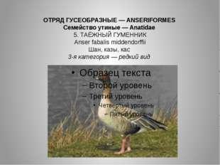 ОТРЯД ГУСЕОБРАЗНЫЕ — ANSERIFORMES Семейство утиные — Anatidae 5. ТАЁЖНЫЙ ГУМЕ