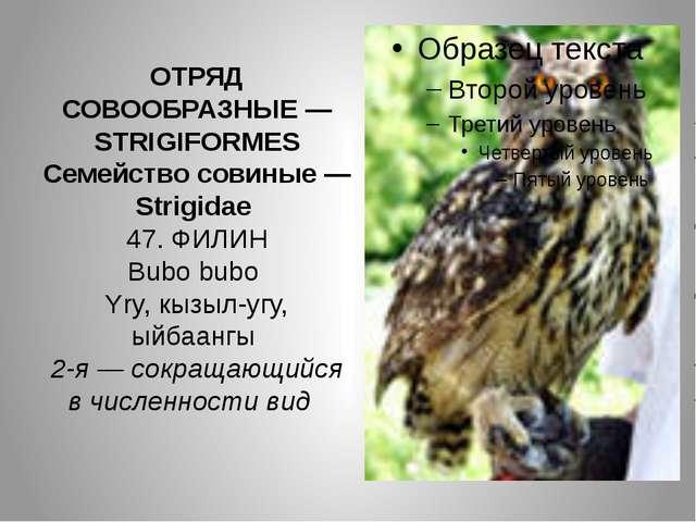 ОТРЯД СОВООБРАЗНЫЕ — STRIGIFORMES Семейство совиные — Strigidae 47. ФИЛИН Bub...