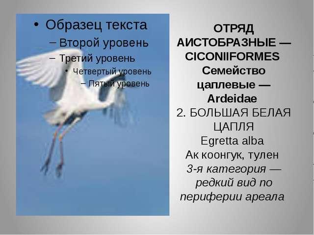 ОТРЯД АИСТОБРАЗНЫЕ — CICONIIFORMES Семейство цаплевые — Ardeidae 2. БОЛЬШАЯ Б...