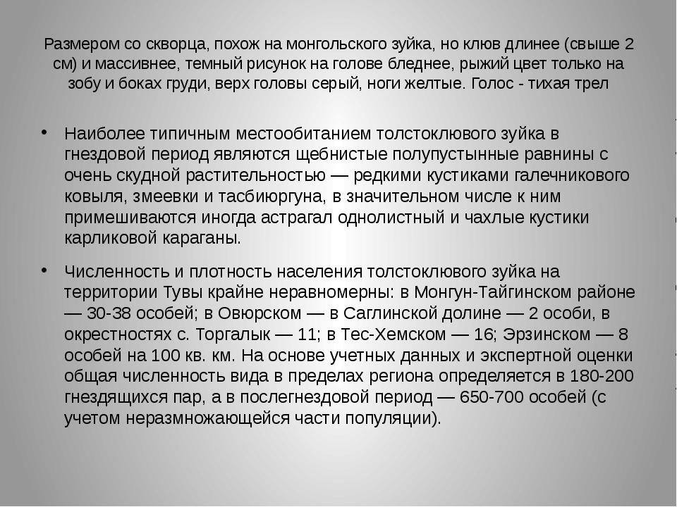 Размером со скворца, похож на монгольского зуйка, но клюв длинее (свыше 2 см)...