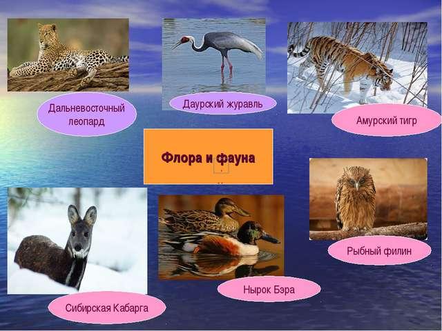 Флора и фауна Дальневосточный леопард Даурский журавль Амурский тигр Рыбный ф...