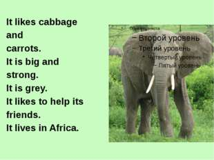 It likes cabbage and carrots. It is big and strong. It is grey. It likes to h