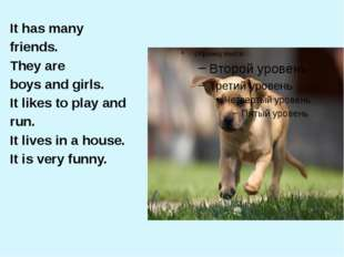 It has many friends. They are boys and girls. It likes to play and run. It li