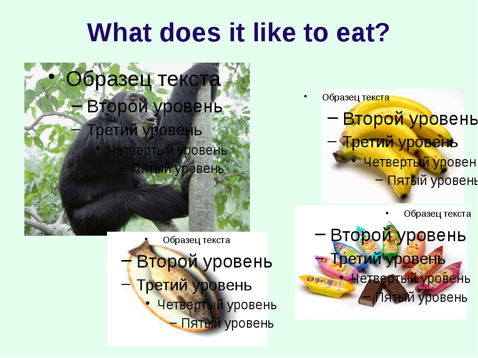 What does it like to eat?