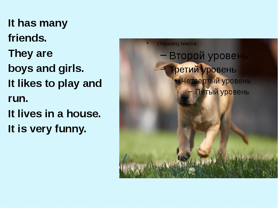 It has many friends. They are boys and girls. It likes to play and run. It li...