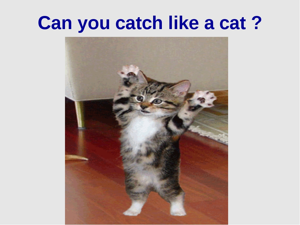 Can you catch like a cat ?