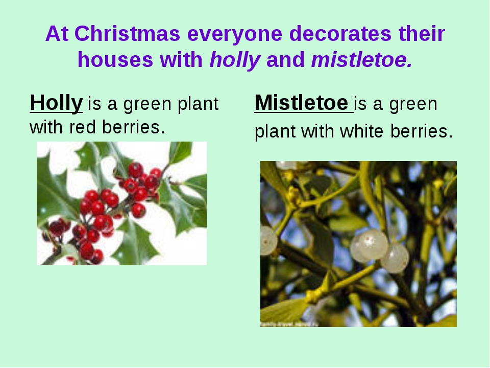 At Christmas everyone decorates their houses with holly and mistletoe. Holly...